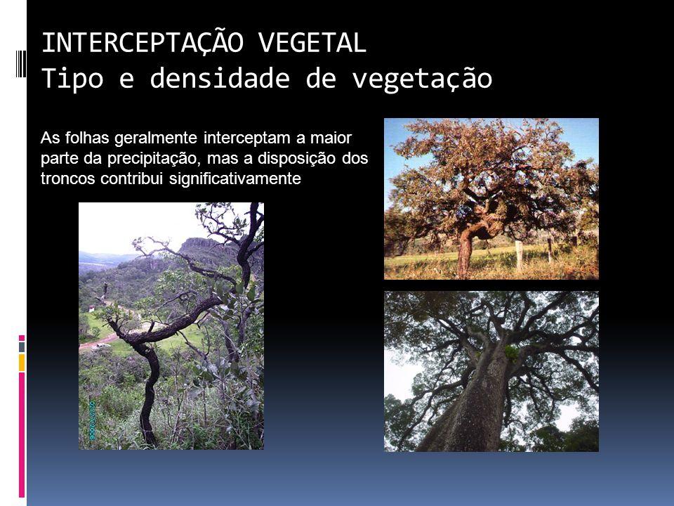 INTERCEPTAÇÃO VEGETAL Tipo e densidade de vegetação As folhas geralmente interceptam a maior parte da precipitação, mas a disposição dos troncos contribui significativamente