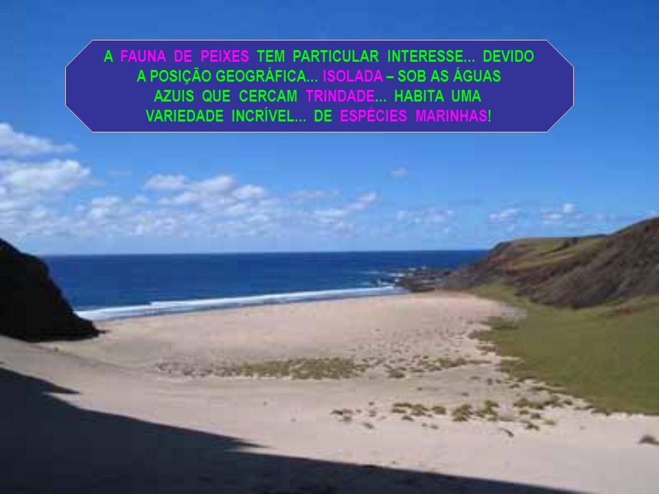 BASE OCEANOGRÁFICA TRINDADE POSSUI UMA VIDA MARINHA PECULIAR... VÁRIAS ESPÉCIES DE PEIXES... ALGUMAS AINDA NÃO CATALOGADAS!