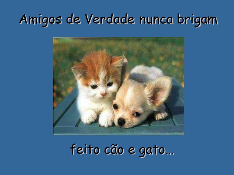 Amigos de Verdade nunca brigam feito cão e gato… feito cão e gato…