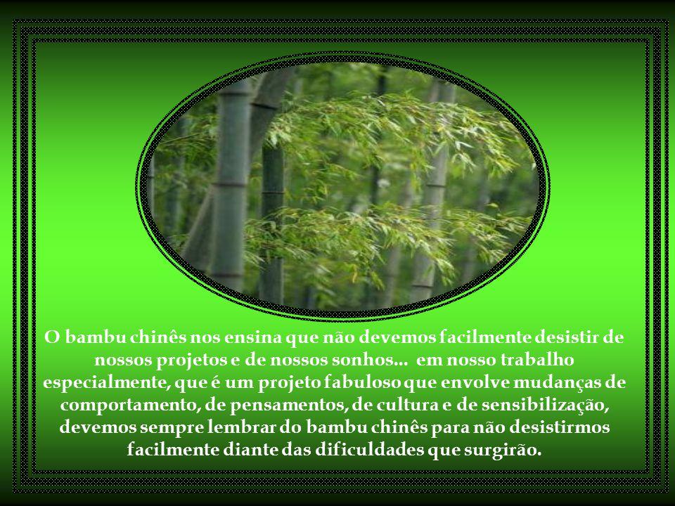 O escritor Stephen Covey escreveu: Muitas coisas na vida pessoal e profissional são iguais ao bambu chinês. Você trabalha, investe tempo, esforço, faz