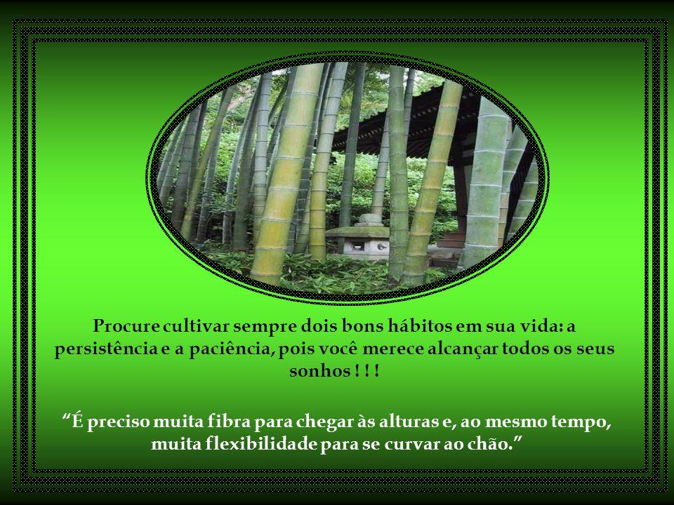 O bambu chinês nos ensina que não devemos facilmente desistir de nossos projetos e de nossos sonhos... em nosso trabalho especialmente, que é um proje