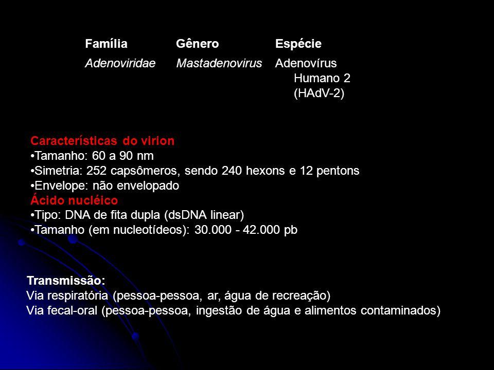 FamíliaGêneroEspécie AdenoviridaeMastadenovirusAdenovírus Humano 2 (HAdV-2) Características do virion Tamanho: 60 a 90 nm Simetria: 252 capsômeros, se