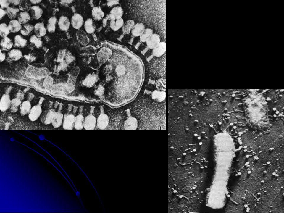 Patogenicidade e características clínicas: Os coronavirus infectam aves e mamíferos, incluindo o homem.