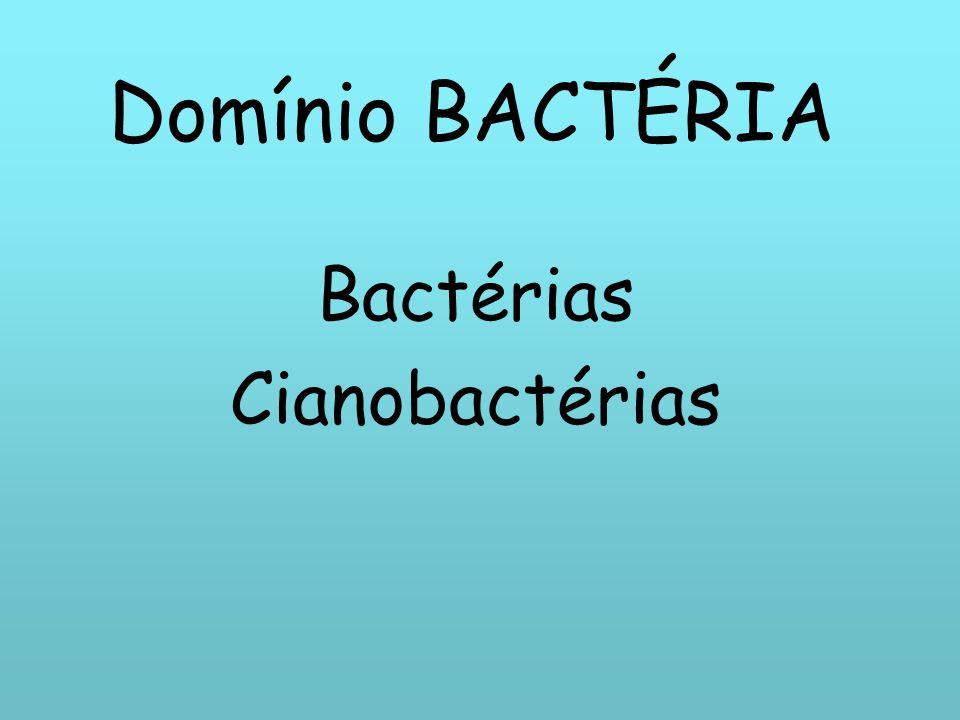 Domínio BACTÉRIA Bactérias Cianobactérias