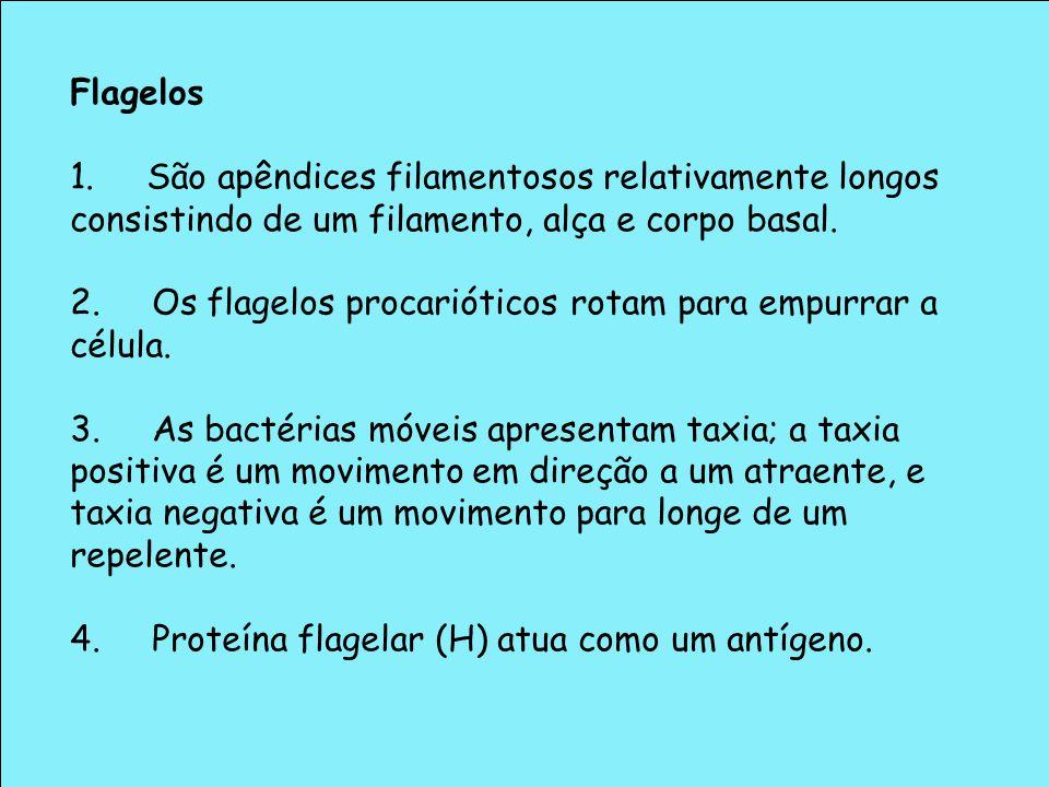 Flagelos 1. São apêndices filamentosos relativamente longos consistindo de um filamento, alça e corpo basal. 2. Os flagelos procarióticos rotam para e