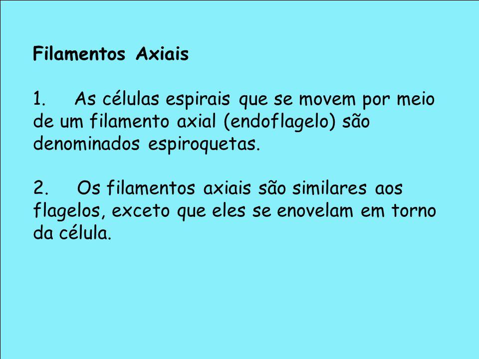 Filamentos Axiais 1. As células espirais que se movem por meio de um filamento axial (endoflagelo) são denominados espiroquetas. 2. Os filamentos axia