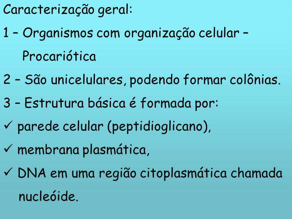 Caracterização geral: 1 – Organismos com organização celular – Procariótica 2 – São unicelulares, podendo formar colônias. 3 – Estrutura básica é form