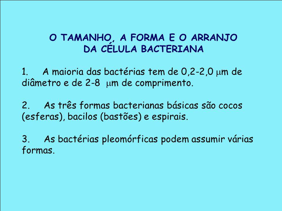 O TAMANHO, A FORMA E O ARRANJO DA CÉLULA BACTERIANA 1. A maioria das bactérias tem de 0,2-2,0 m de diâmetro e de 2-8 m de comprimento. 2. As três form