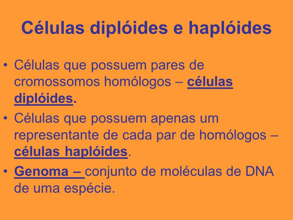 Genes alelos Ocupam os mesmos loci gênicos em cromossomos homólogos.