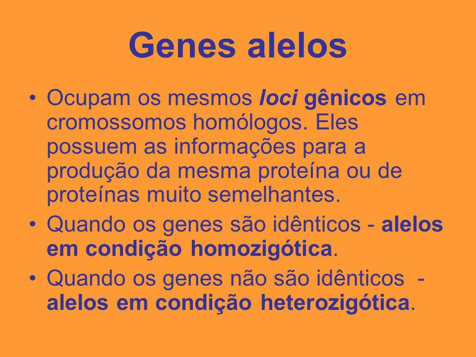 Cromossomos humanos As células diplóides humanas possuem 46 cromossomos.