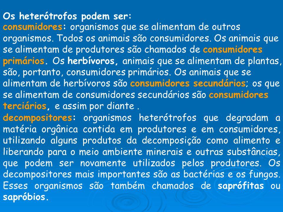 Os heterótrofos podem ser: consumidores: organismos que se alimentam de outros organismos. Todos os animais são consumidores. Os animais que se alimen