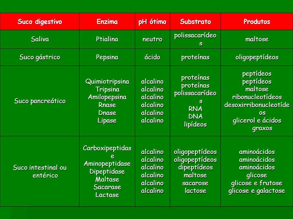 Suco digestivo Enzima pH ótimo SubstratoProdutos SalivaPtialinaneutro polissacarídeo s maltose Suco gástrico Pepsinaácidoproteínasoligopeptídeos Suco pancreático QuimiotripsinaTripsinaAmilopepsinaRnaseDnaseLipasealcalinoalcalinoalcalinoalcalinoalcalinoalcalinoproteínasproteínas polissacarídeo s RNADNAlipídeospeptídeospeptídeosmaltoseribonucleotídeos desoxirribonucleotíde os glicerol e ácidos graxos Suco intestinal ou entérico Carboxipeptidas e AminopeptidaseDipeptidaseMaltaseSacaraseLactasealcalinoalcalinoalcalinoalcalinoalcalinoalcalinooligopeptídeosoligopeptídeosdipeptídeosmaltosesacaroselactoseaminoácidosaminoácidosaminoácidosglicose glicose e frutose glicose e galactose