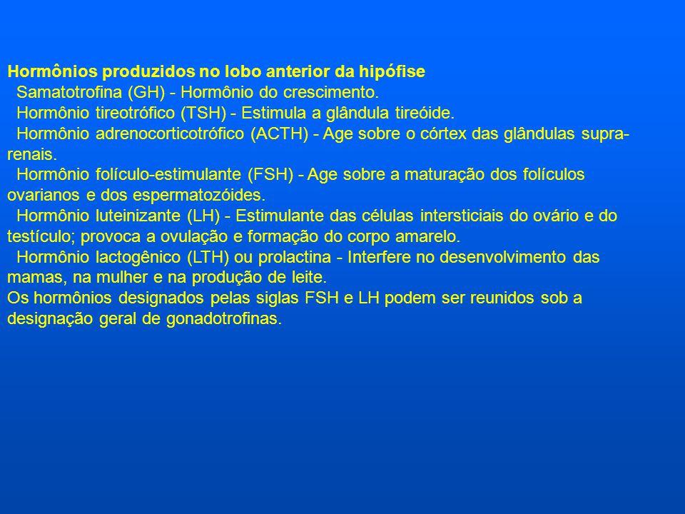 Hormônios produzidos no lobo anterior da hipófise Samatotrofina (GH) - Hormônio do crescimento. Hormônio tireotrófico (TSH) - Estimula a glândula tire