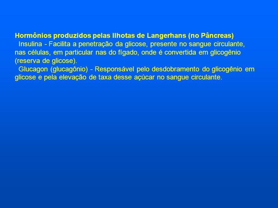 Hormônios produzidos pelas Ilhotas de Langerhans (no Pâncreas) Insulina - Facilita a penetração da glicose, presente no sangue circulante, nas células