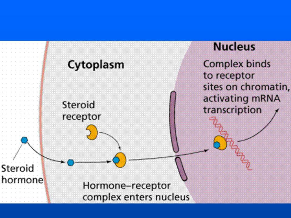 Hormônios produzidos no lobo anterior da hipófise Samatotrofina (GH) - Hormônio do crescimento.