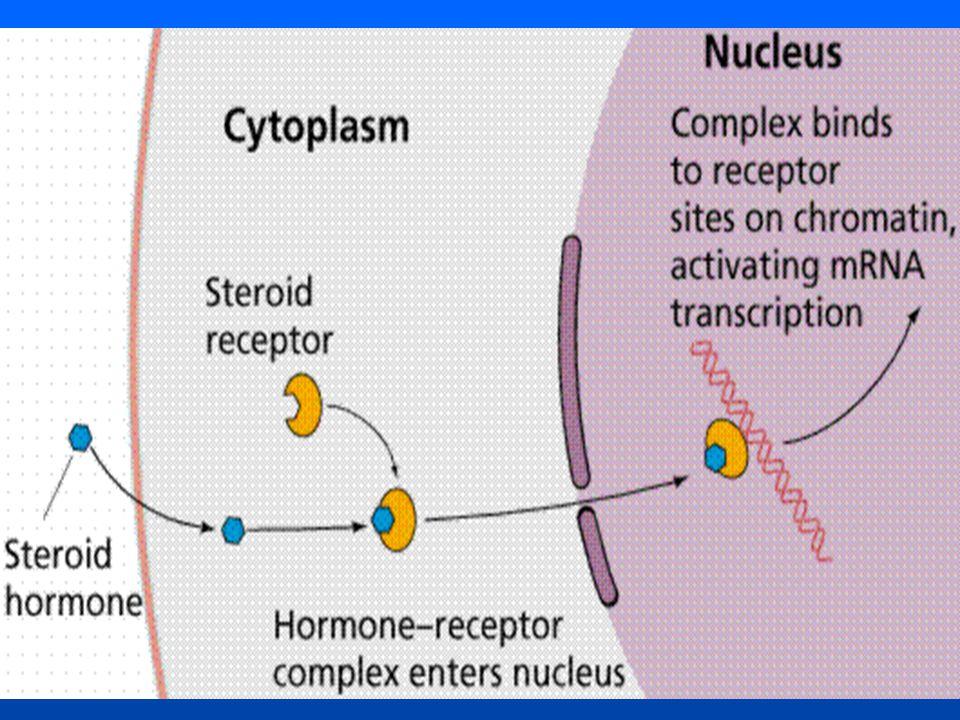 Hormônios produzidos pelo lobo posterior da hipófise Oxitocina - Age particularmente na musculatura lisa da parede do útero, facilitando, assim, a expulsão do feto e da placenta.
