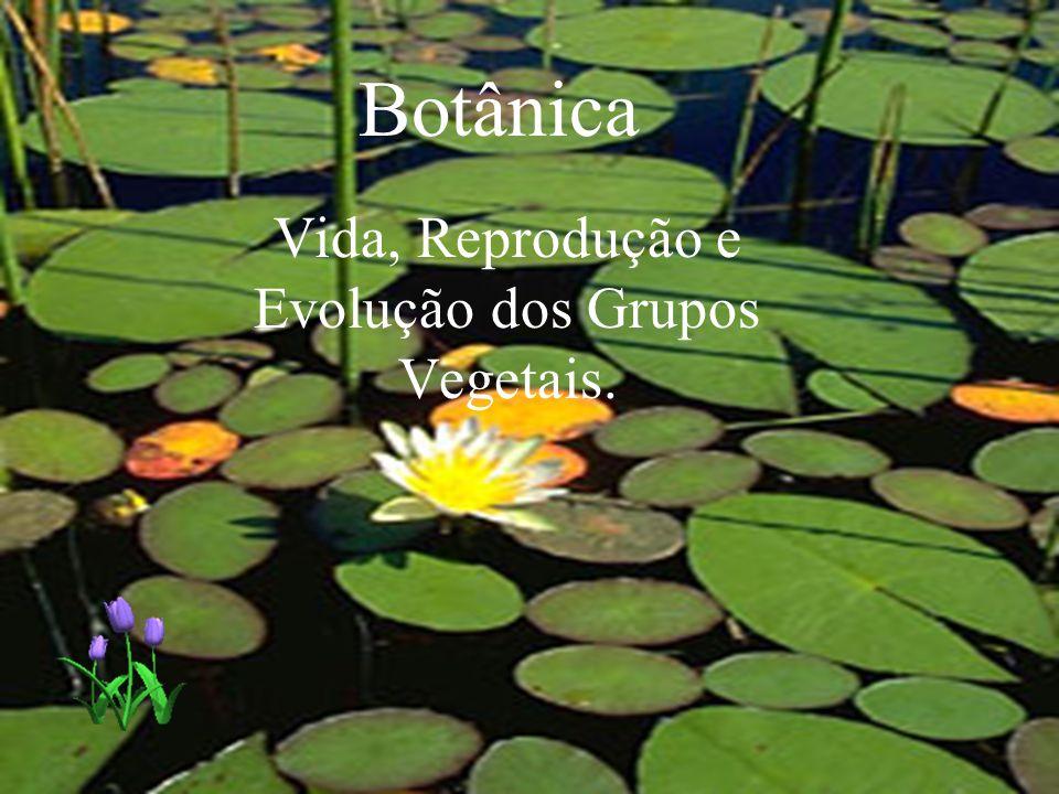 Botânica Vida, Reprodução e Evolução dos Grupos Vegetais.