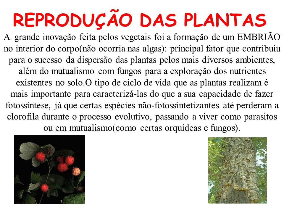 A grande inovação feita pelos vegetais foi a formação de um EMBRIÃO no interior do corpo(não ocorria nas algas): principal fator que contribuiu para o