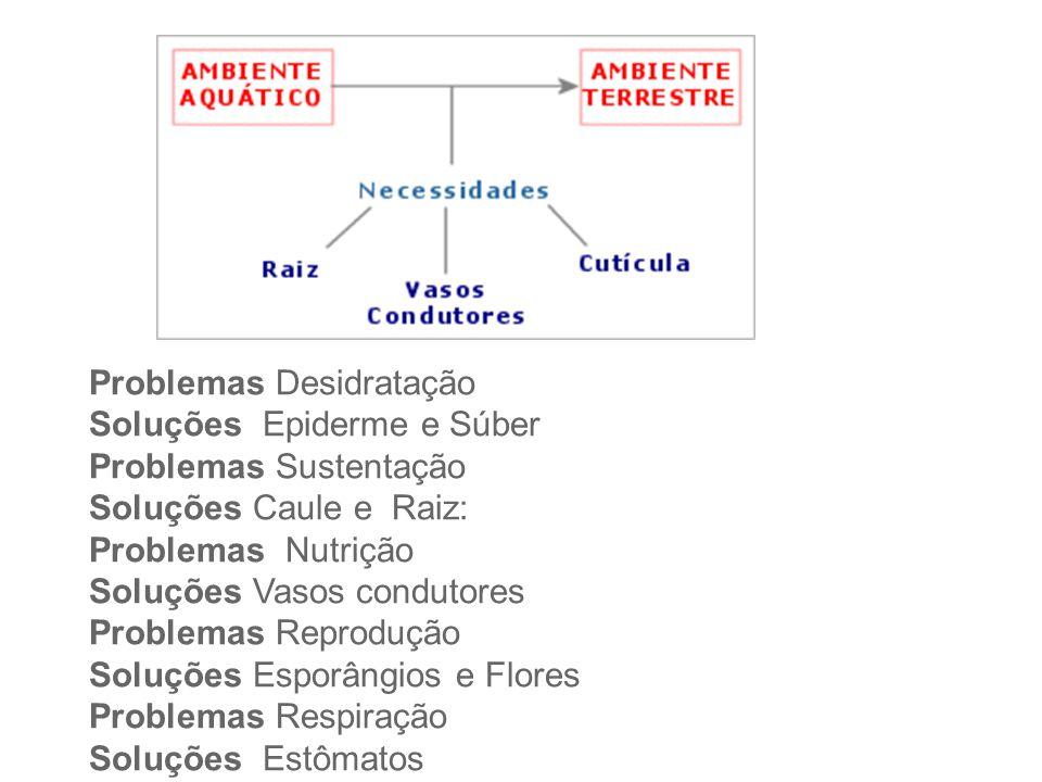 Problemas Desidratação Soluções Epiderme e Súber Problemas Sustentação Soluções Caule e Raiz: Problemas Nutrição Soluções Vasos condutores Problemas R