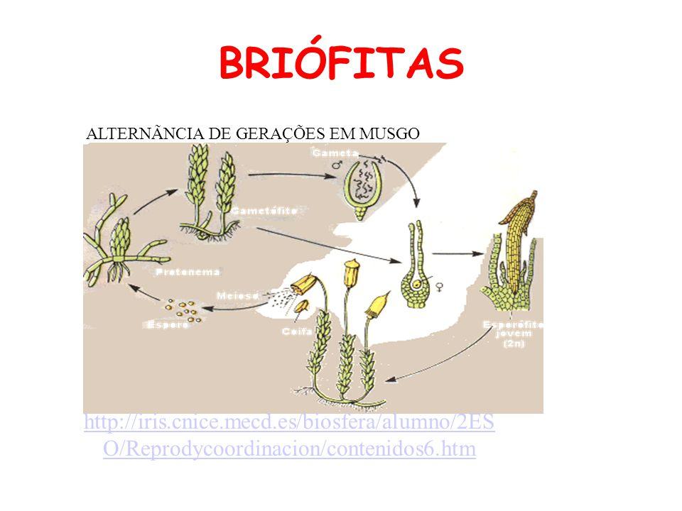 BRIÓFITAS ALTERNÃNCIA DE GERAÇÕES EM MUSGO http://iris.cnice.mecd.es/biosfera/alumno/2ES O/Reprodycoordinacion/contenidos6.htm