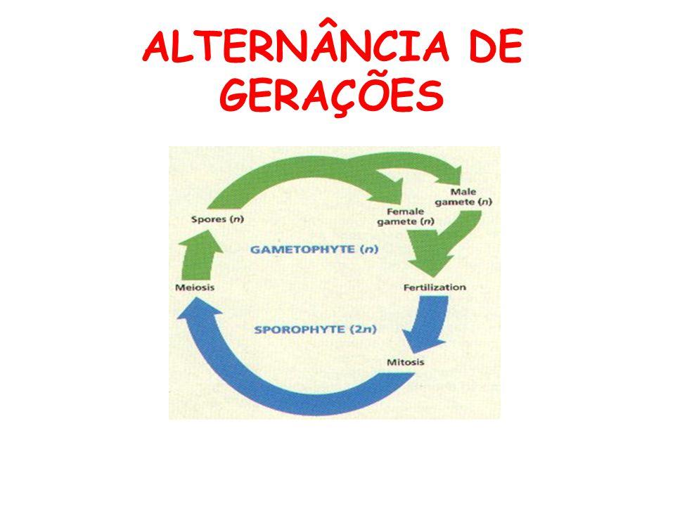 ALTERNÂNCIA DE GERAÇÕES