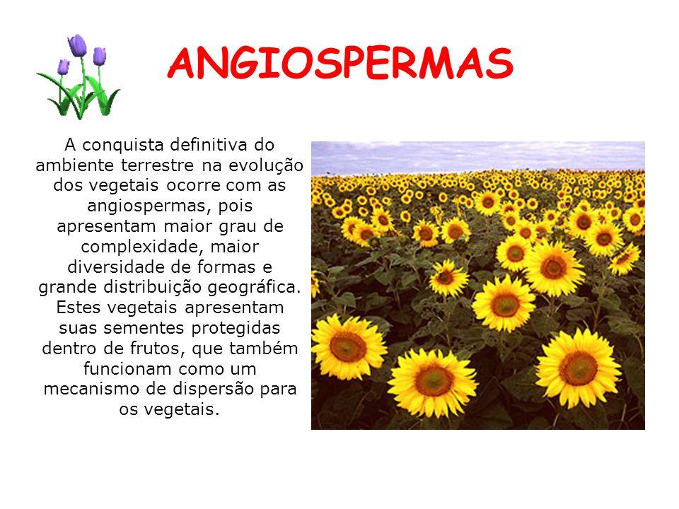 ANGIOSPERMAS A conquista definitiva do ambiente terrestre na evolução dos vegetais ocorre com as angiospermas, pois apresentam maior grau de complexid