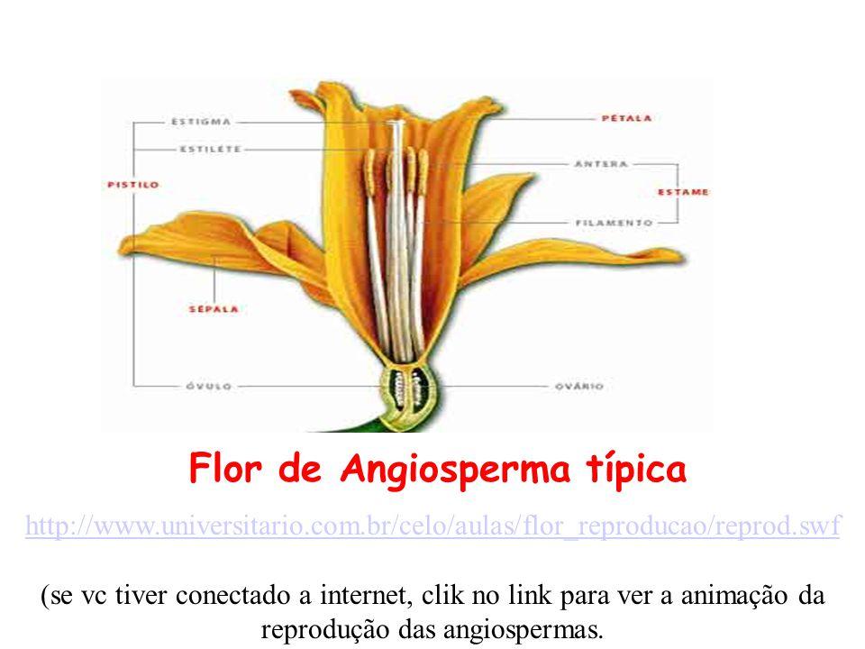 Flor de Angiosperma típica http://www.universitario.com.br/celo/aulas/flor_reproducao/reprod.swf (se vc tiver conectado a internet, clik no link para