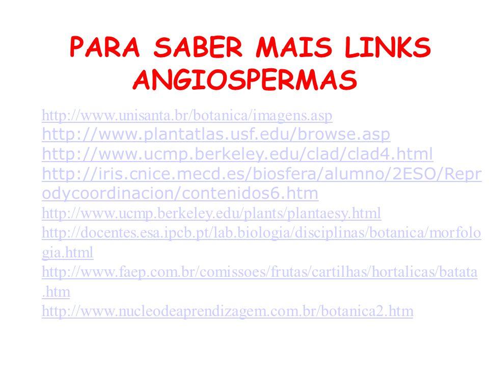 PARA SABER MAIS LINKS ANGIOSPERMAS http://www.unisanta.br/botanica/imagens.asp http://www.plantatlas.usf.edu/browse.asp http://www.ucmp.berkeley.edu/c