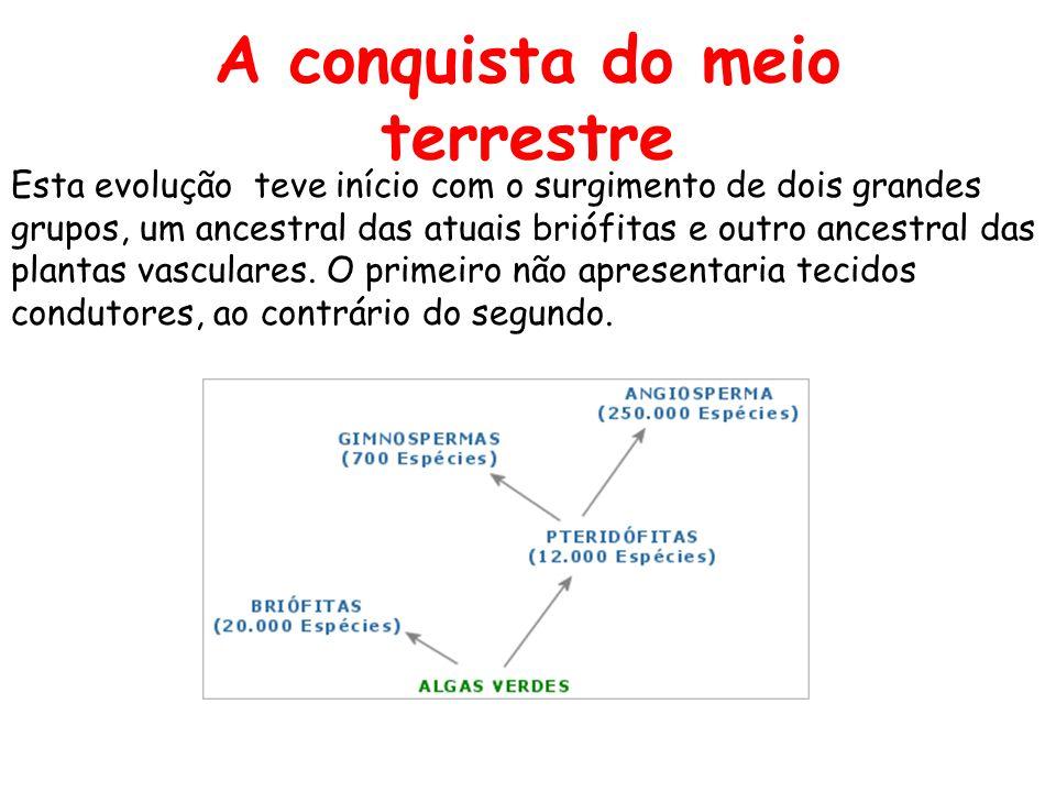 PARA SABER MAIS LINKS ANGIOSPERMAS http://www.unisanta.br/botanica/imagens.asp http://www.plantatlas.usf.edu/browse.asp http://www.ucmp.berkeley.edu/clad/clad4.html http://iris.cnice.mecd.es/biosfera/alumno/2ESO/Repr odycoordinacion/contenidos6.htm http://www.ucmp.berkeley.edu/plants/plantaesy.html http://docentes.esa.ipcb.pt/lab.biologia/disciplinas/botanica/morfolo gia.html http://www.faep.com.br/comissoes/frutas/cartilhas/hortalicas/batata.htm http://www.nucleodeaprendizagem.com.br/botanica2.htm