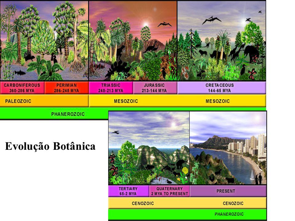 Flor de Angiosperma típica http://www.universitario.com.br/celo/aulas/flor_reproducao/reprod.swf (se vc tiver conectado a internet, clik no link para ver a animação da reprodução das angiospermas.
