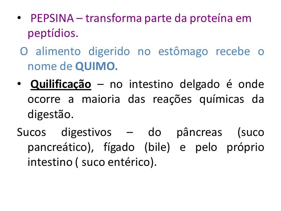 PEPSINA – transforma parte da proteína em peptídios. O alimento digerido no estômago recebe o nome de QUIMO. Quilificação – no intestino delgado é ond