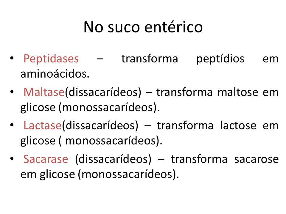 No suco entérico Peptidases – transforma peptídios em aminoácidos. Maltase(dissacarídeos) – transforma maltose em glicose (monossacarídeos). Lactase(d