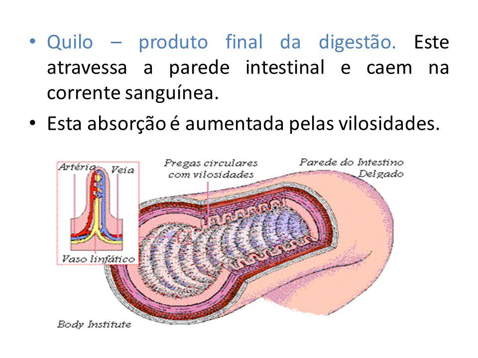 Quilo – produto final da digestão. Este atravessa a parede intestinal e caem na corrente sanguínea. Esta absorção é aumentada pelas vilosidades.
