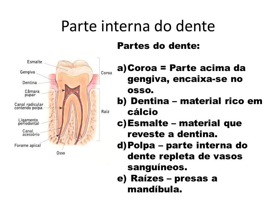 Parte interna do dente Partes do dente: a)Coroa = Parte acima da gengiva, encaixa-se no osso. b) Dentina – material rico em cálcio c)Esmalte – materia