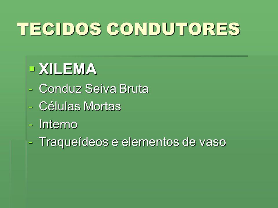 TECIDOS CONDUTORES XILEMA XILEMA -Conduz Seiva Bruta -Células Mortas -Interno -Traqueídeos e elementos de vaso
