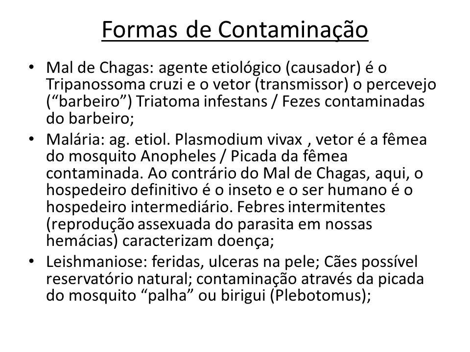 Formas de Contaminação Mal de Chagas: agente etiológico (causador) é o Tripanossoma cruzi e o vetor (transmissor) o percevejo (barbeiro) Triatoma infe
