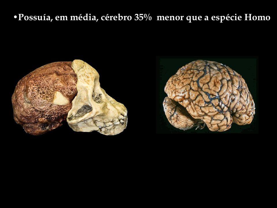 Possuía, em média, cérebro 35% menor que a espécie Homo