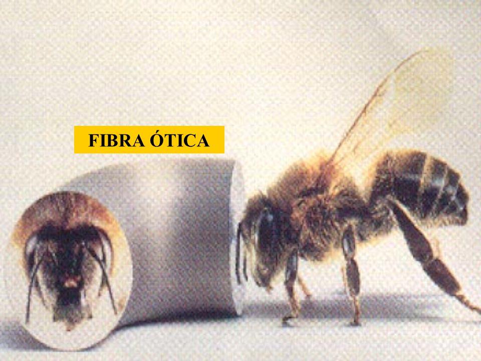 FIBRA ÓTICA