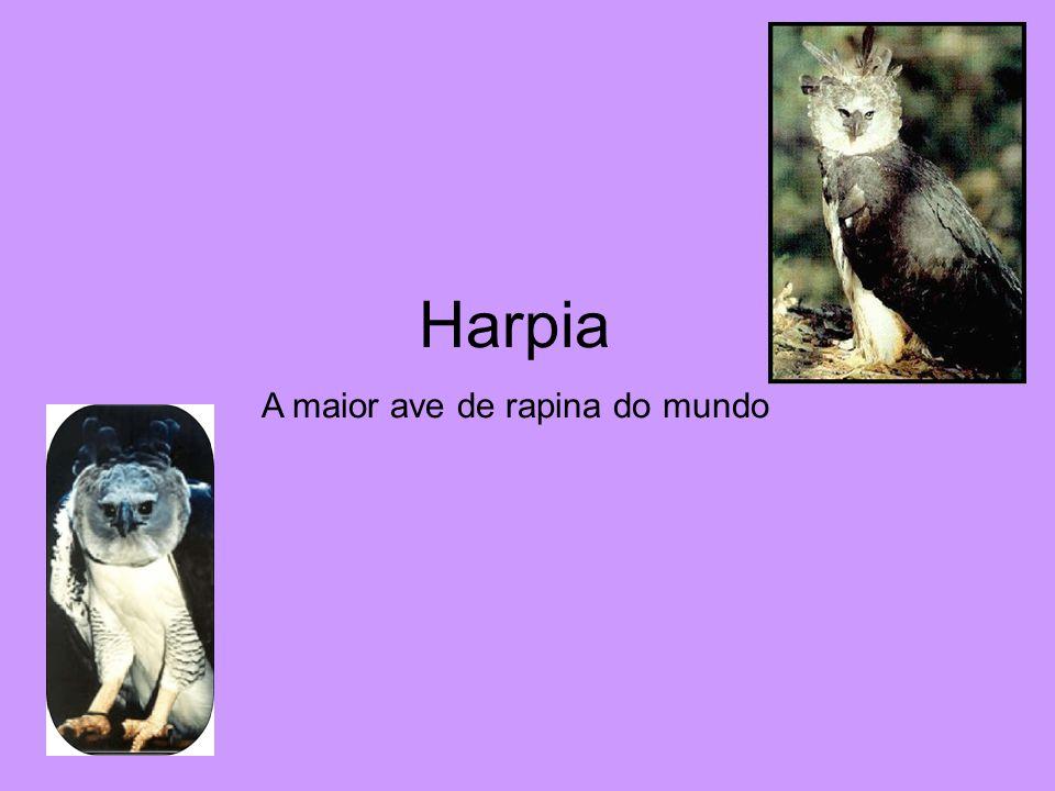 Harpia A maior ave de rapina do mundo