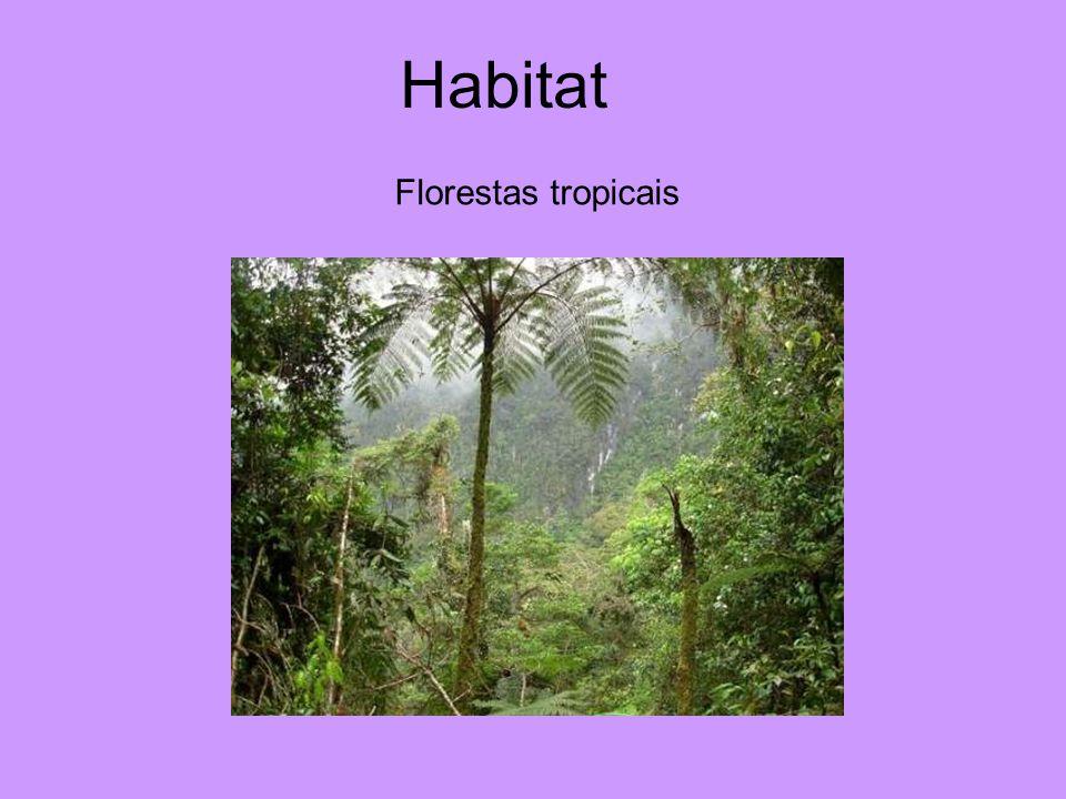 Habitat Florestas tropicais
