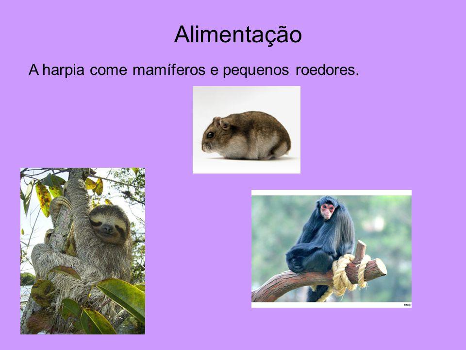 A harpia come mamíferos e pequenos roedores. Alimentação