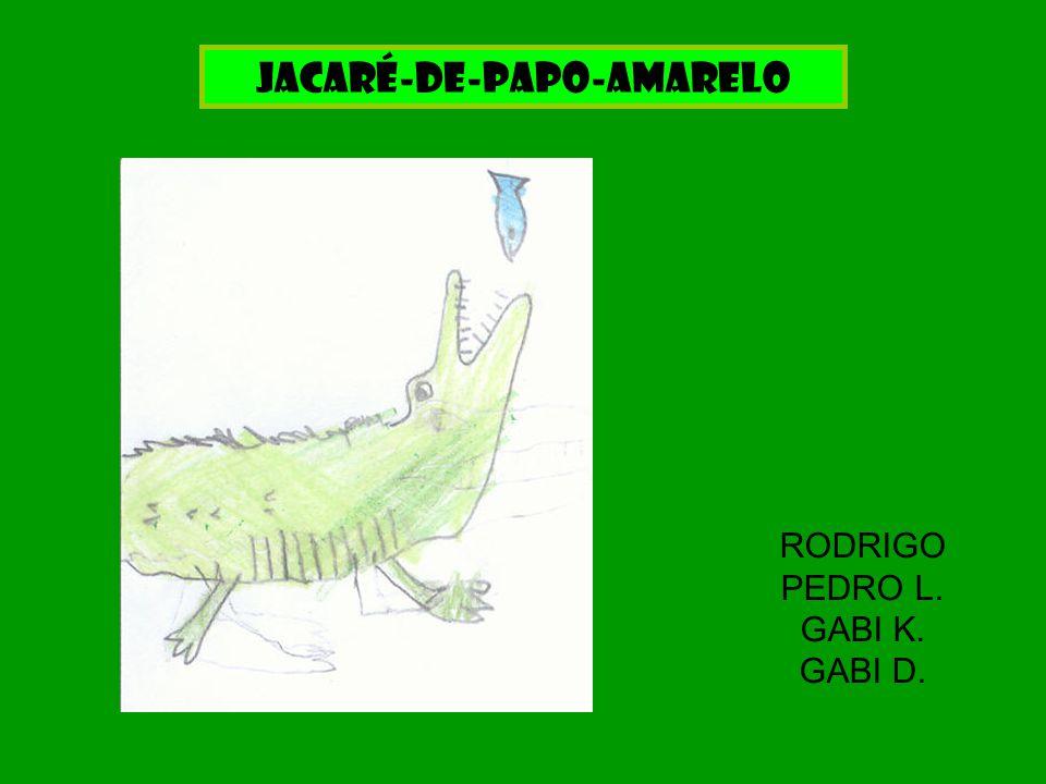 Jacaré-de-papo-amarelo RODRIGO PEDRO L. GABI K. GABI D.
