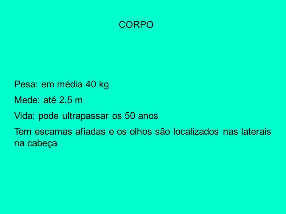 CORPO Pesa: em média 40 kg Mede: até 2,5 m Vida: pode ultrapassar os 50 anos Tem escamas afiadas e os olhos são localizados nas laterais na cabeça