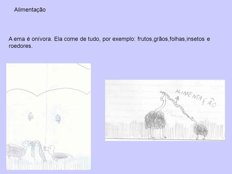 Gestação / reprodução O filhote da ema tem o tamanho de um galo e é uma presa ótima para o gavião e para o cachorro do mato.