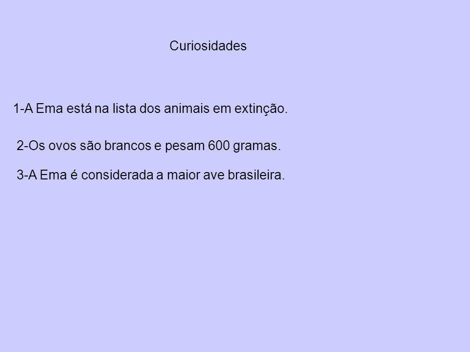 Curiosidades 1-A Ema está na lista dos animais em extinção. 2-Os ovos são brancos e pesam 600 gramas. 3-A Ema é considerada a maior ave brasileira.