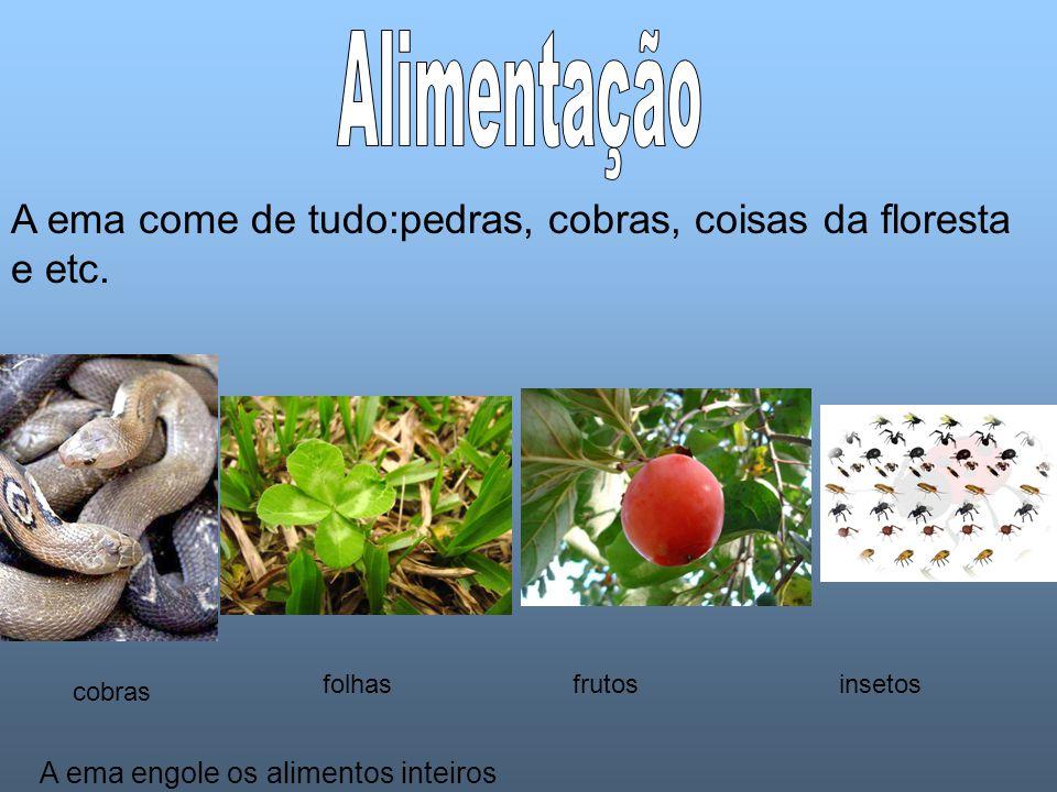 A ema come de tudo:pedras, cobras, coisas da floresta e etc.