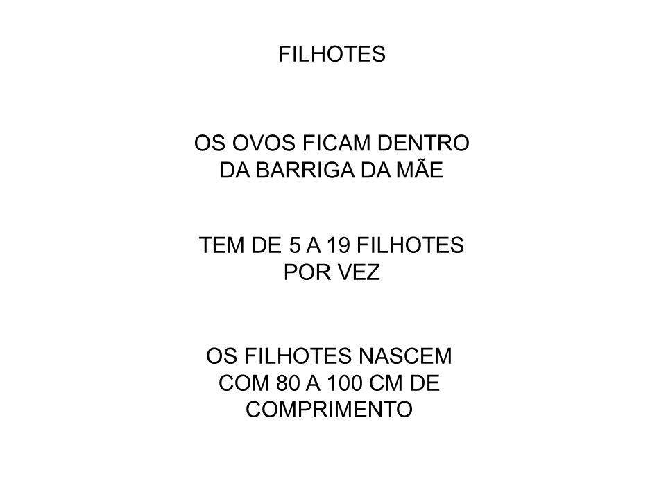 FILHOTES OS FILHOTES NASCEM COM 80 A 100 CM DE COMPRIMENTO TEM DE 5 A 19 FILHOTES POR VEZ OS OVOS FICAM DENTRO DA BARRIGA DA MÃE