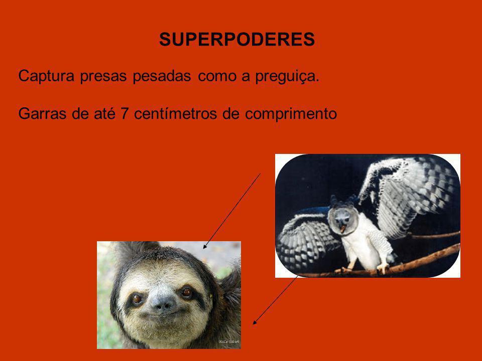 Captura presas pesadas como a preguiça. Garras de até 7 centímetros de comprimento SUPERPODERES