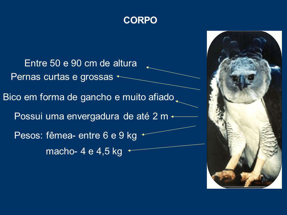 CORPO Entre 50 e 90 cm de altura Pernas curtas e grossas Pesos: fêmea- entre 6 e 9 kg macho- 4 e 4,5 kg Possui uma envergadura de até 2 m Bico em forma de gancho e muito afiado