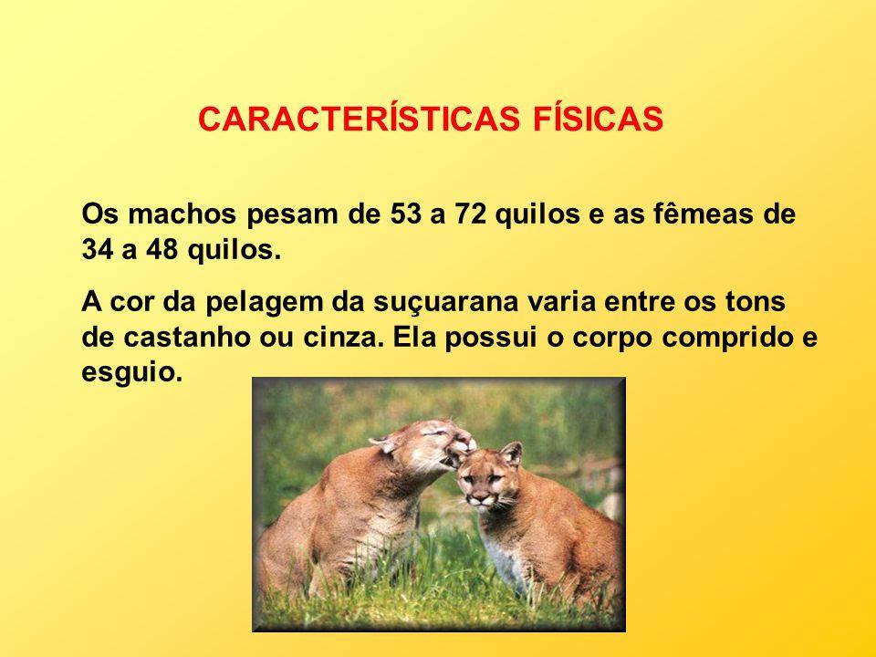 CARACTERÍSTICAS FÍSICAS Os machos pesam de 53 a 72 quilos e as fêmeas de 34 a 48 quilos. A cor da pelagem da suçuarana varia entre os tons de castanho